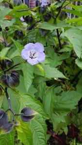Muddy Boots garden in bloom image